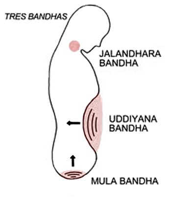 bandhas yoga Mula bandha y piso pélvico