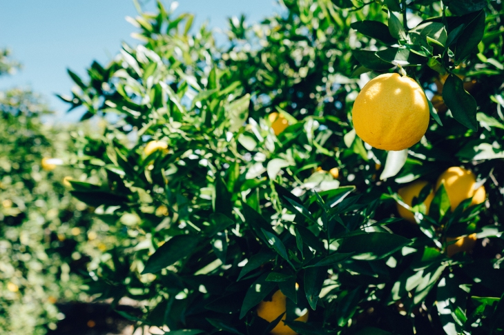 limon alimento alcalino cistitis